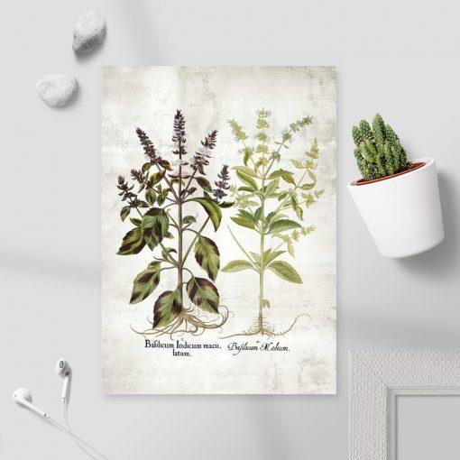 Plakat bazylia i jej kwiaty - gatunki