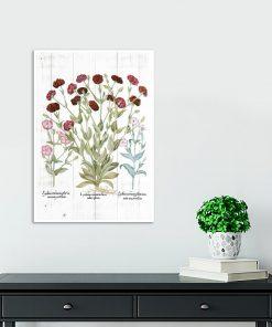 Plakat botaniczny z czerwonymi kwiatami do gabinetu