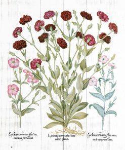 Plakat botaniczny z czerwonymi kwiatami do jadalni