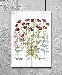 Plakat botaniczny z czerwonymi kwiatami do przedpokoju