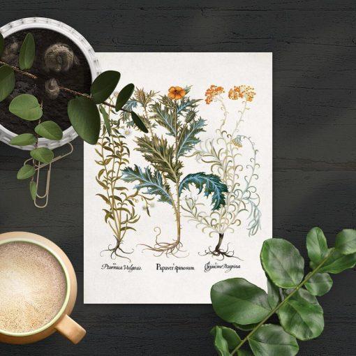 Plakat botaniczny z ziołami