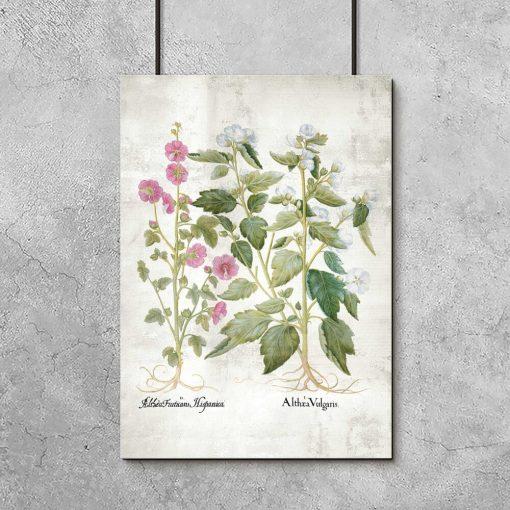 Plakat edukacyjny z kwiatami