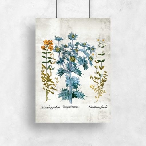 Plakat edukacyjny z łacińskimi nazwami kwiatów