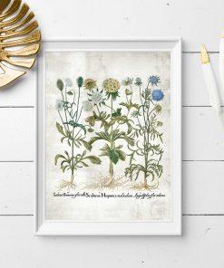 Plakat edukacyjny z motywem kwiatowym