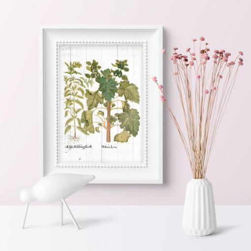 Plakat edukacyjny z ziołami na bielonych deskach