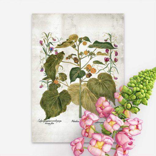 Plakat jako pomoc dydaktyczna z roślinami