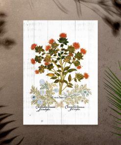 Plakat jako pomoc naukowa z ziołami