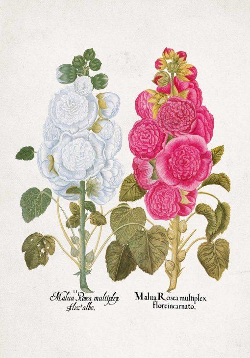 Plakat malwa różowa i biała do powieszenia w świetlicy