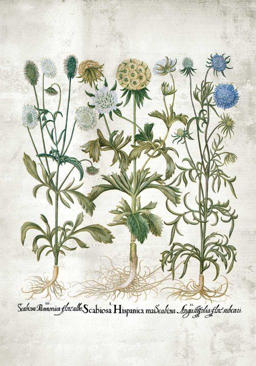 Plakat rośliny ozdobne