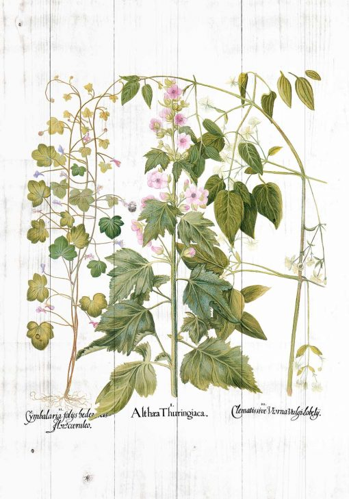 Plakat rośliny zielne i ozdobne do dekoracji sklepu