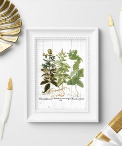 Plakat rośliny zielne - melisa