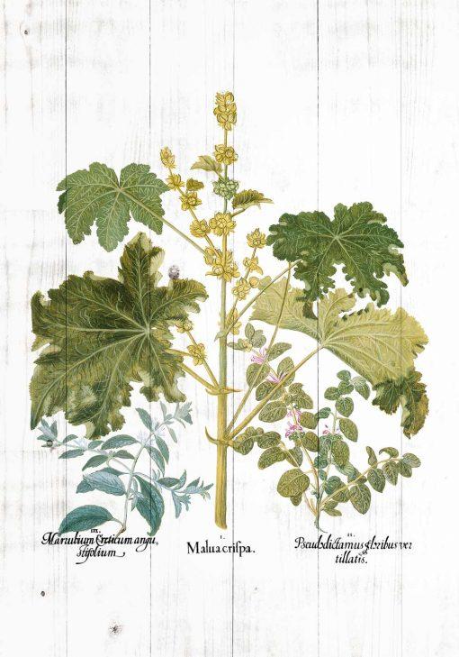 Plakat rustykalny z zielonymi roślinami
