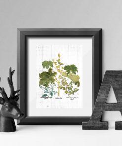 Plakat rustykalny z ziołami