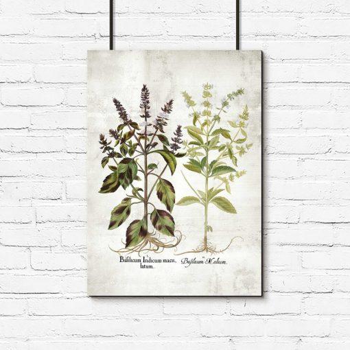 Plakat z kwiatami bazylii do dekoracji ściany w kuchni