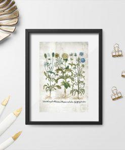 Plakat z kwiatami do ozdoby gabinetu biologicznego