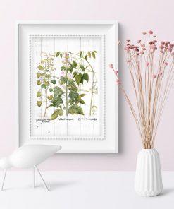 Plakat z kwiatami i ziołami do dekoracji przedpokoju
