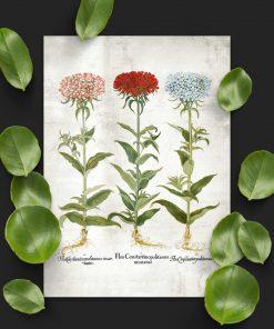 Plakat z kwiatami ogrodowymi - byliny