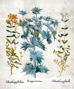 Plakat z kwiatuszkami i łacińskimi nazwami