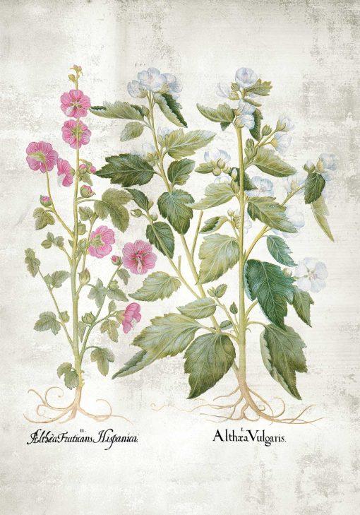 Plakat z kwiatuszkami