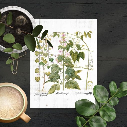 Plakat z motywem botanicznym do ozdoby szkoły