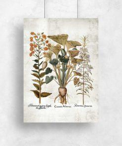 Plakat z motywem roślinnym leczniczych i dekoracyjnych