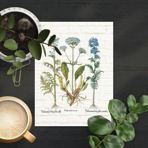 Plakat z motywem rośliny leczniczej do dekoracji apteki