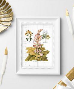 Plakat z motywem rustykalnym - rośliny kwitnące