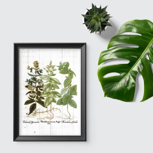 Plakat z motywem ziół - melisa