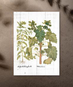 Plakat z motywem ziół
