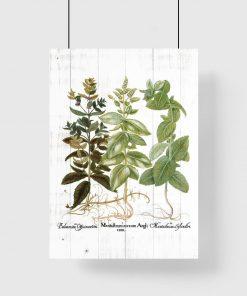 Plakat z motywem ziółek