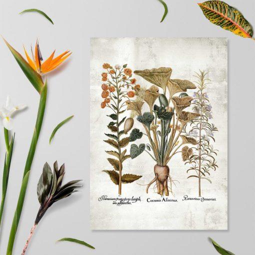 Plakat z ogórkiem i kwiatami ozdobnymi