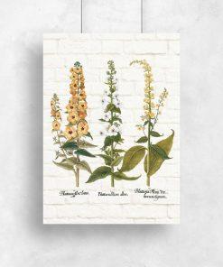 Plakat z rośliną ziołową