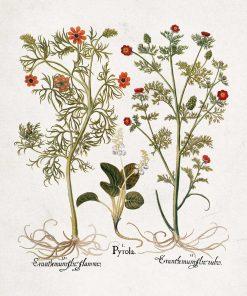 Plakat z roślinami łąkowymi - pomoc naukowa