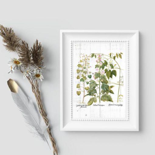 Plakat z roślinami ozdobnymi do dekoracji poczekalni