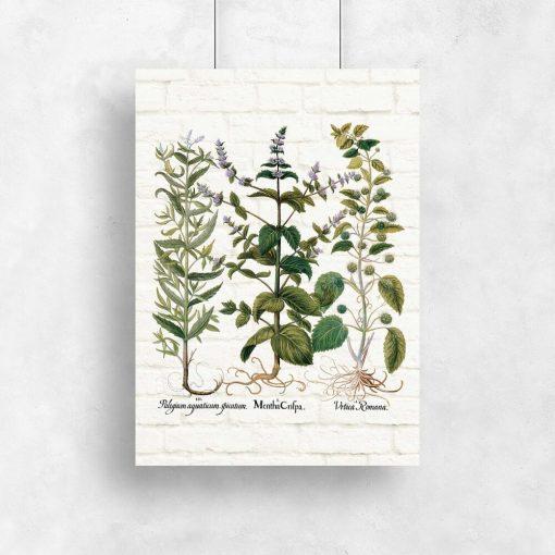 Plakat z ziołami do oprawienia w ramę