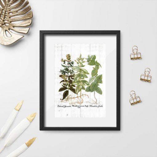 Plakat z ziołami i łacińskimi nazwami do szkoły