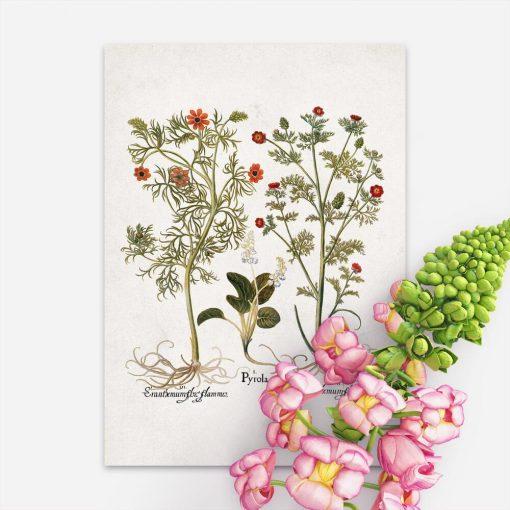 Plakaty edukacyjny z roślinami