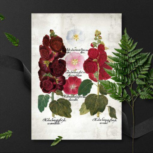 Plakaty z motywem malw ogrodowych