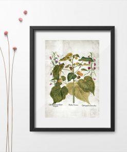 Pomoc dydaktyczna - plakat z roślinami